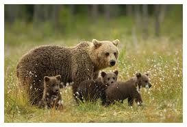 Mama Bear & Her Cubs